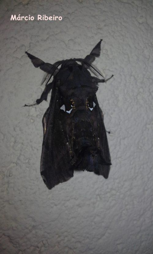 Mariposa  com rosto aparece em Peruíbe