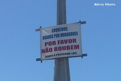 Moradores de Peruíbe pedem para que ladrões não roubem coqueiros da praia