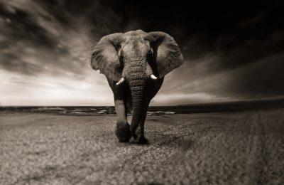 Áudio Conto: Dose para elefante