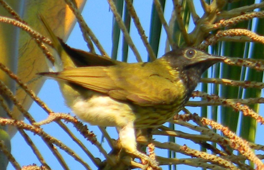 Observação de pássaros ajuda a preservar as aves e movimenta o turismo de Peruíbe