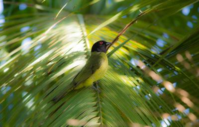 Birdwatching: Conheça os novos registros feitos na Zona Rural de Peruíbe
