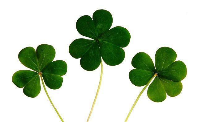 Trevo irlandês