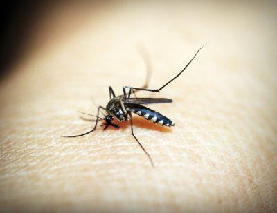 Novo vírus pode causar epidemia no sudeste do Brasil