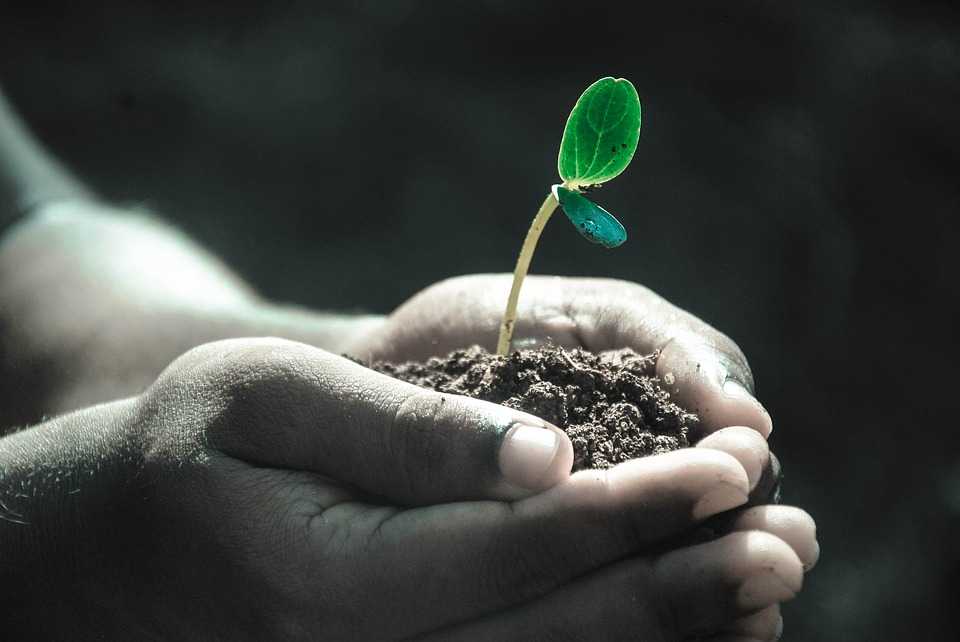 Um planeta em colapso – A geração da desistência e as responsabilidades negadas