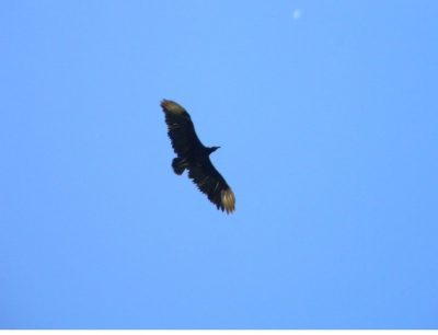 Artigo de Opinião: Não é o primeiro Fórum de Turismo e não é o 1º Encontro de Aves