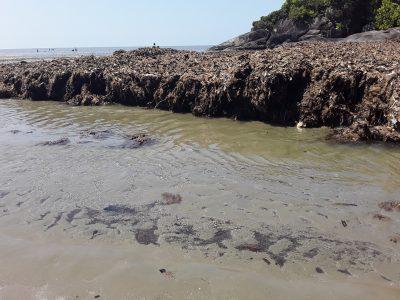 Monte de lixo:  Veja em fotos a situação precária que se encontra a Praia do Costão