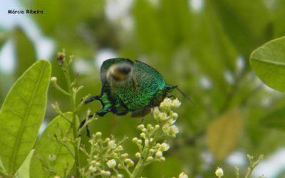 Linda borboleta e de difícil visualização é fotografada na Zona rural de Peruíbe