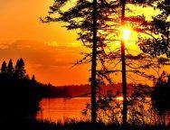 Por do sol na floresta