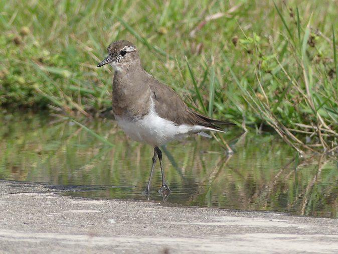 Ciclone-bomba traz novos registros de aves para Peruíbe