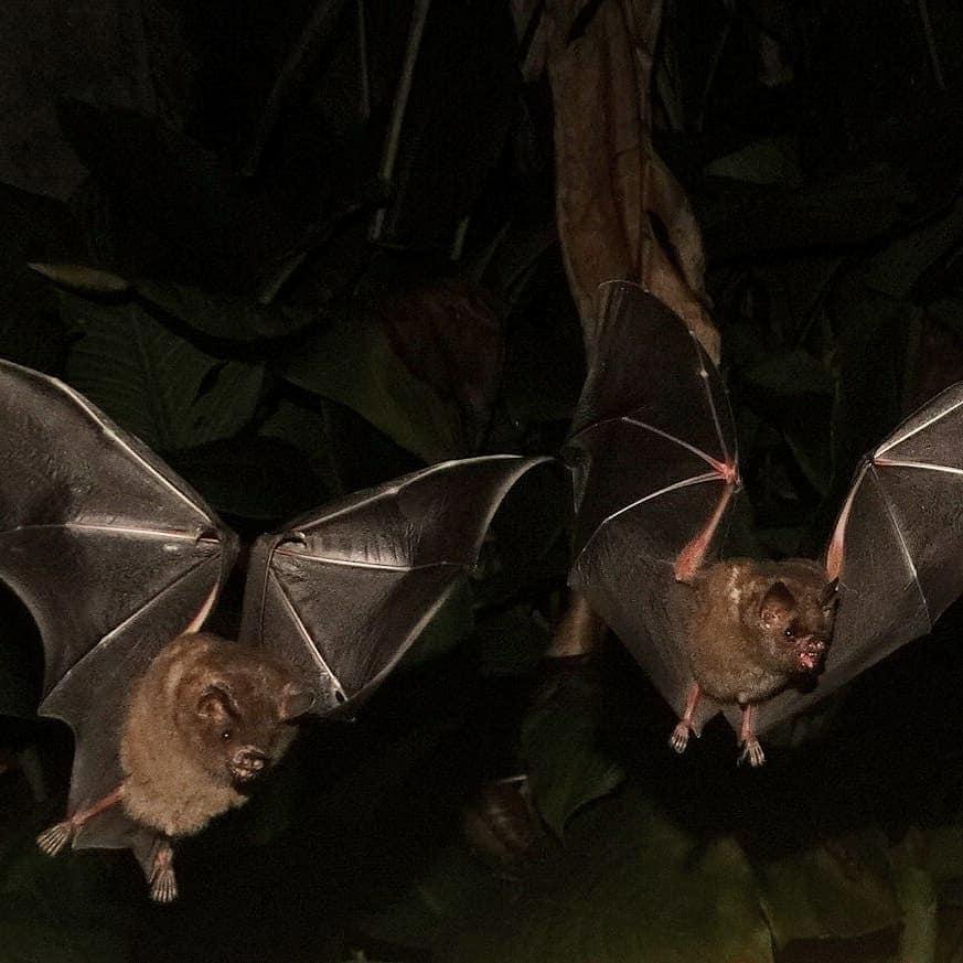 Novidade: Agência de Peruíbe investe no turismo de observação de morcegos