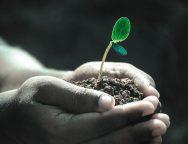 Mãos segurando um punhado de terra com uma planta germinando dele